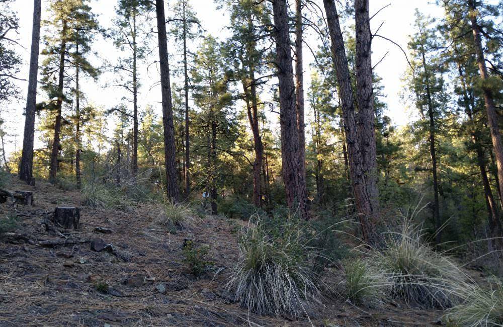 0 E Pine Meadow Road #100, Prescott, AZ 86303